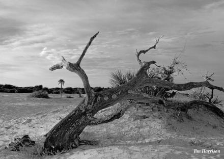 Dune Group by Jim Harrison Safari Large