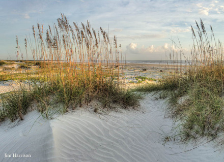 Cumberland Dunes by Jim Harrison Safari Large