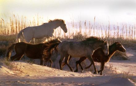 New Dune Horses