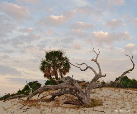 Palm and Bones by Jim Harrison Safari Large