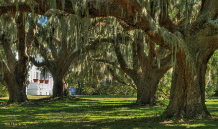 Plum Orchard Front Lawn by Jim Harrison Safari Large