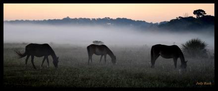 judycumhorses