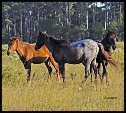 threehorses