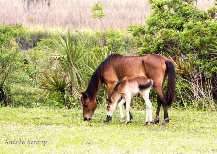 Foal & mother